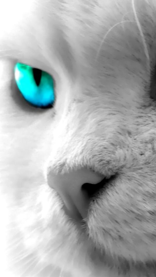 Blue Cat Eyes Wallpaper 956 540x960 - Wallpaper - HD Wallpaper